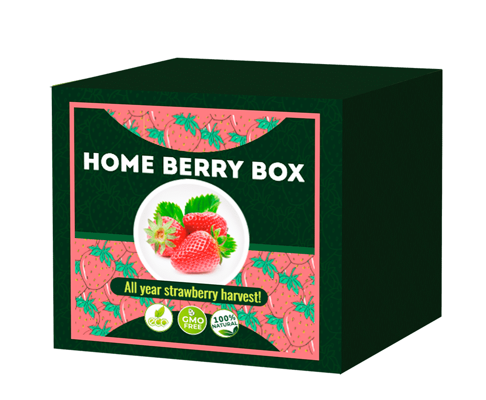 Home Berry Box What is it?